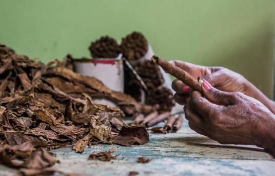 El sector tabaco dominicano genera más de 135,000 empleos