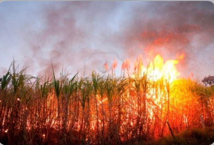 Familia Severino acusa al grupo Vicini de quemar caña en su propiedad